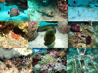 Vida marinha em Cuba