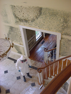 Mold Remediation, LEW Corporation