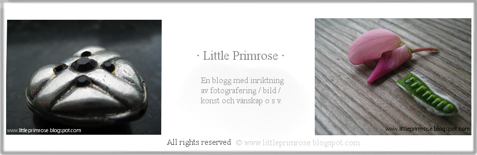 Little Primrose