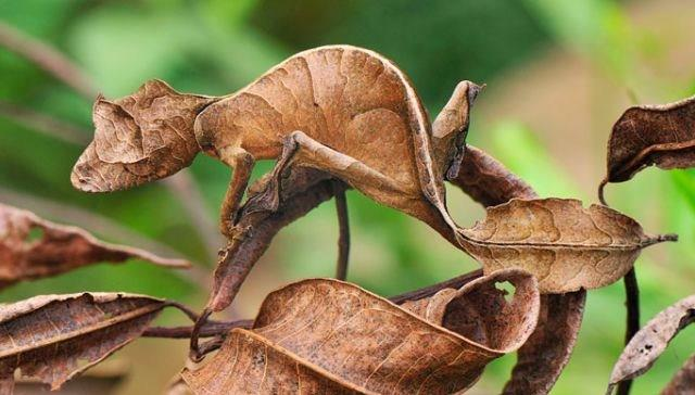Leaves Creature Form Interesting Pic