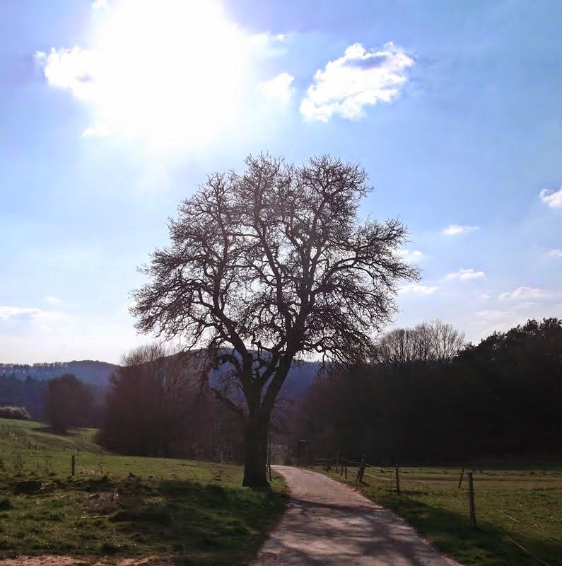 Alter Birnbaum am Weg zu den 2 Steinen