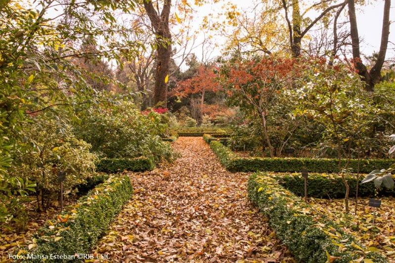 Senderos de oto o en el real jard n bot nico de madrid for Jardin botanico madrid horario