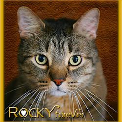 RIP ROCKY