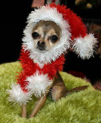 Imagenes+de+Navidad Imagenes chistosas de perros navideño