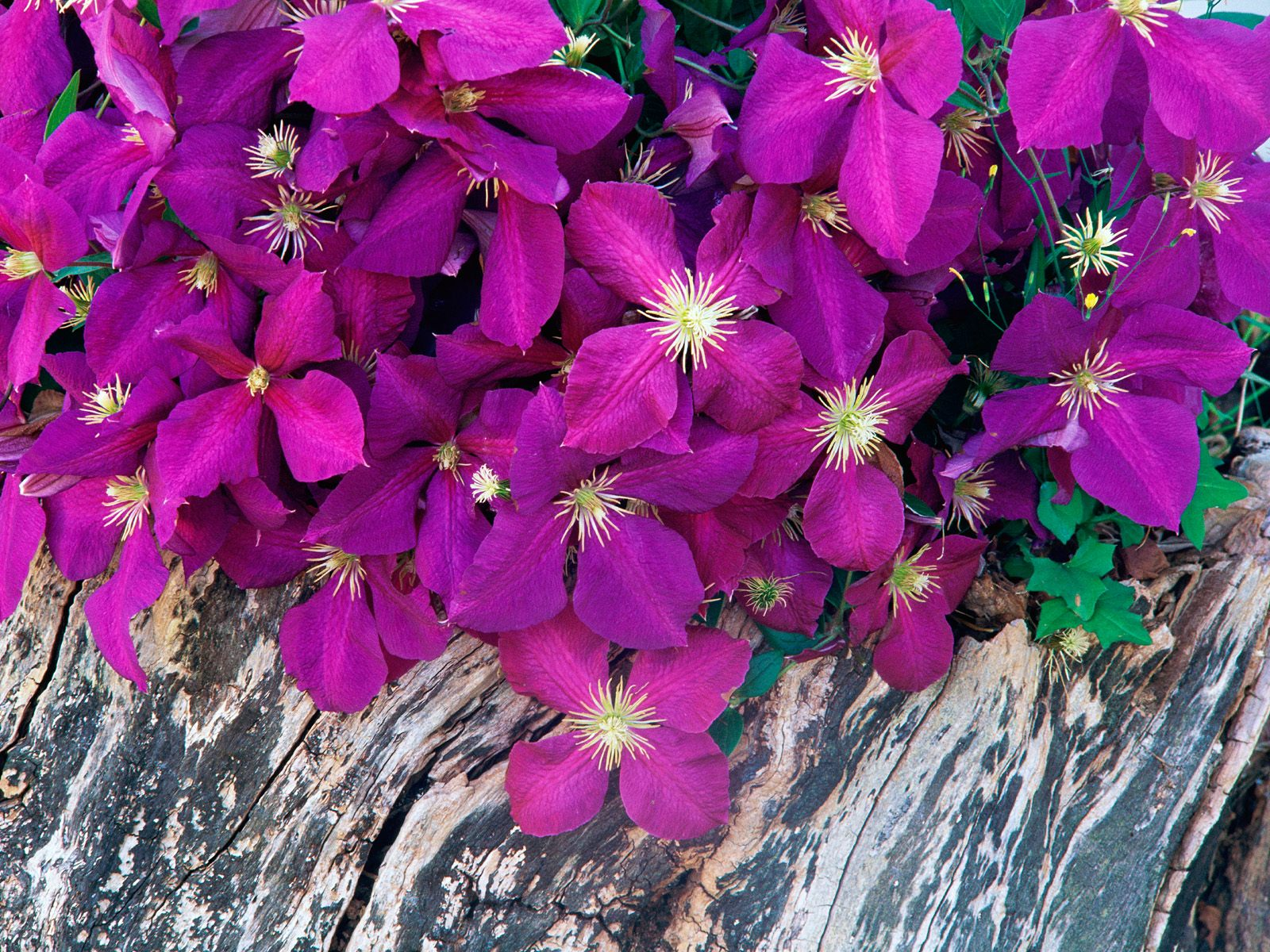 Download Walpaper Cantik, Bunga Dan Bingkai Photo