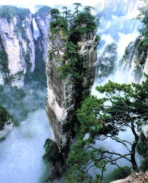 Avatar Pandora Landscape: Curiosidades Del Mundo: El Parque Forestal Nacional De