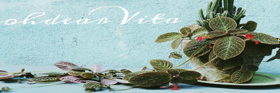 oh dear Vita!