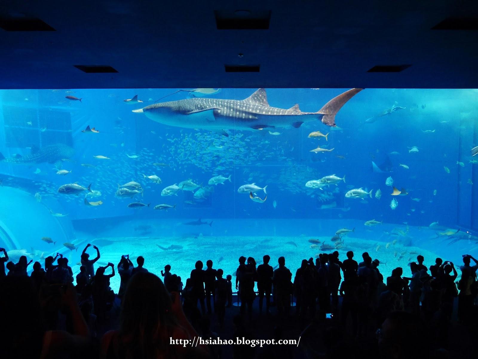 沖繩-海洋博公園-美麗海水族館-黑潮之海-景點-自由行-旅遊-旅行-okinawa-ocean-expo-park-Churaumi