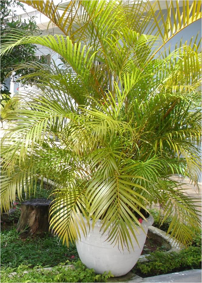 Bambu Plantar Veja S Um Passo A Passo De Como Voc Pode