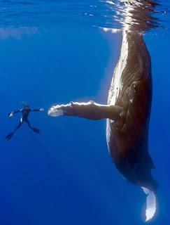 cero caza ballenas