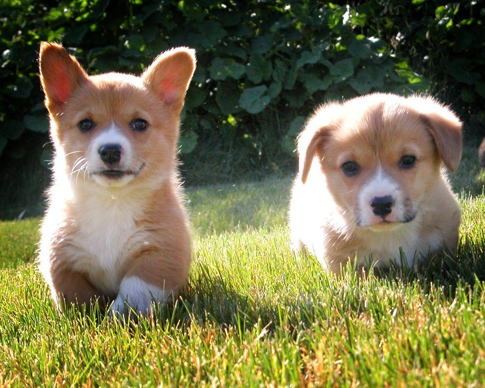 2. go puppies go