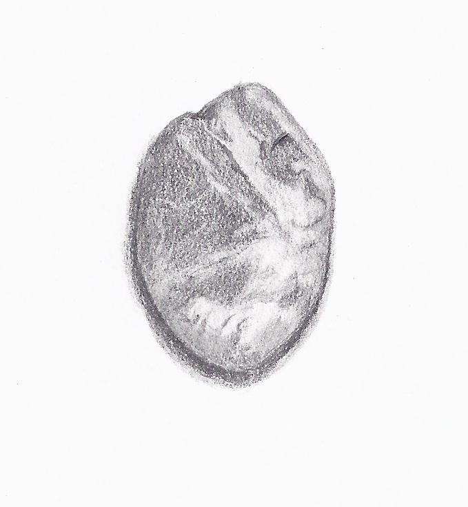 holly 39 s daily draw pebble 1