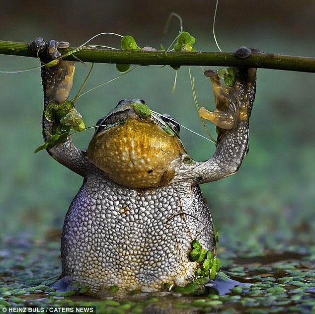 gambar katak - gambar katak lucu