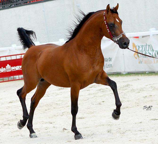 caballos\