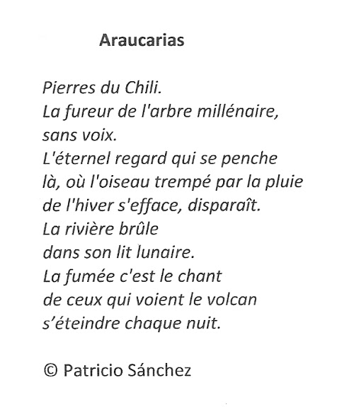 ARAUCARIAS - Patricio SANCHEZ ROJAS, FRANCE.