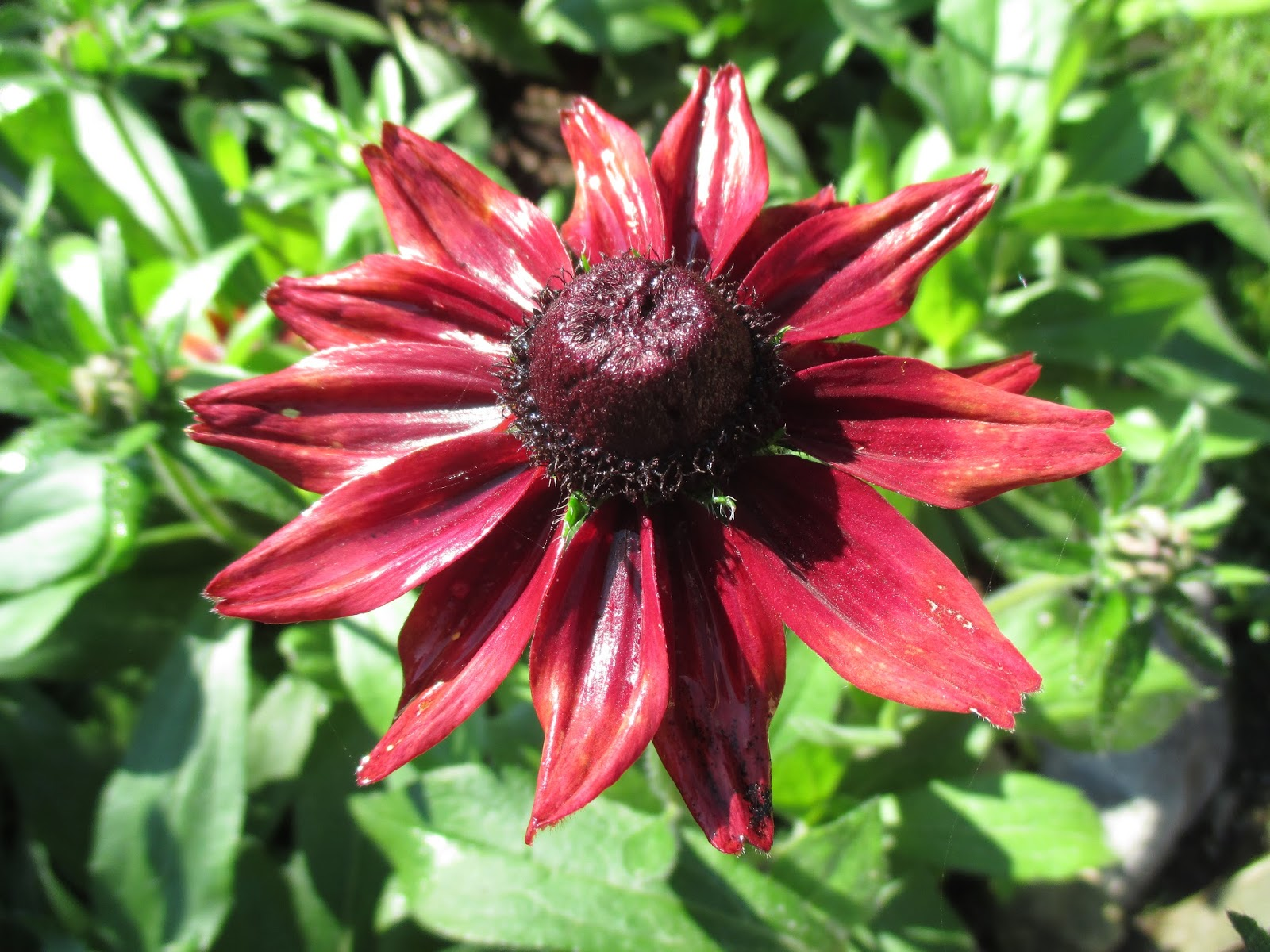 rotary botanical gardens hort blog the heat intensifies. Black Bedroom Furniture Sets. Home Design Ideas