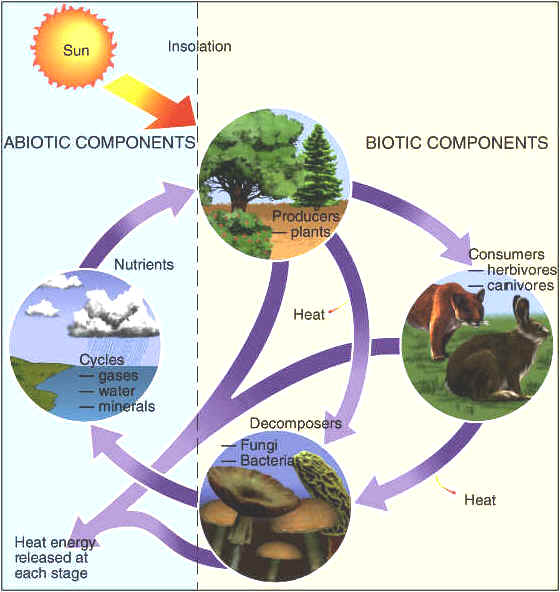 abiotic factors and its environment Key abiotic factors in  biotic factors determine the success of a species in its particular ecosystem many biotic factors  and pollutants in the environment.