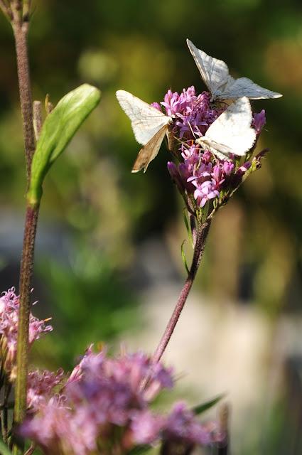 Flora & Fauna Swiss Alps // Flora & Fauna Schweizer Alpen