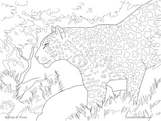 Snow Leopard Coloring Pages Realistic