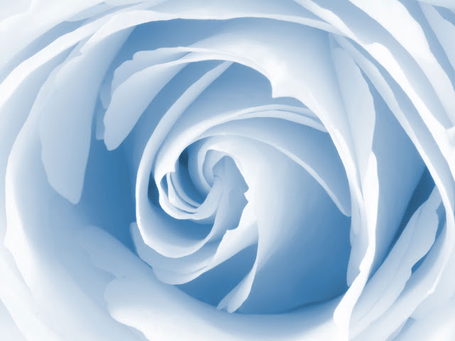 ��� ��� ��� ���� 2013, ��� ����� ��� ���� 2013 blue_rose_wallpaper.jpg