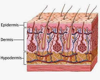 ilustasi permukaan kulit