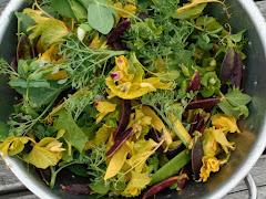 Dr. Calvin Lamborn's Bouquet Mix Peas