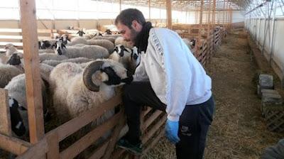 Επιστροφή στην κτηνοτροφία