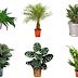 NASA recomenda: 5 plantas que não devem faltar em sua casa para purificar o ar