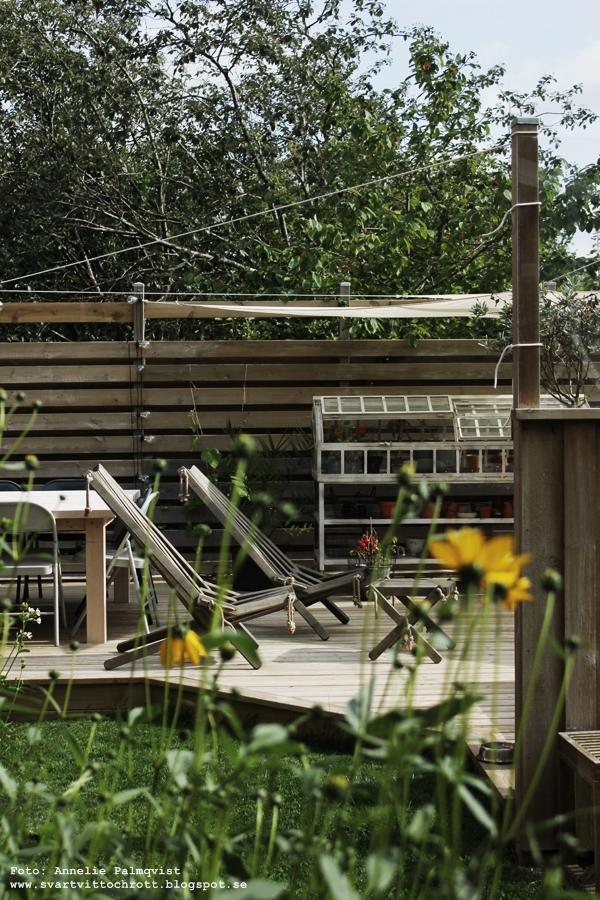 trädäck, kiwiplanta, kiwiträd, kiwi, uteplats, uteplatsen, altan, altanen, inredning, inredningsblogg, blogg, bloggar, trädgård, ecochair, ecochairs, vilstol, vilstolar, miniväxthus, växthus, trädgården,