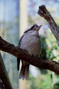Gaya Gravitasi - Burung
