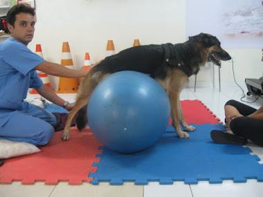 Cinesioterapia com auxilio de bola