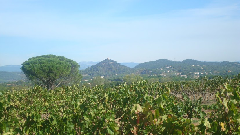 Provencial Provence: a taste of life in the South
