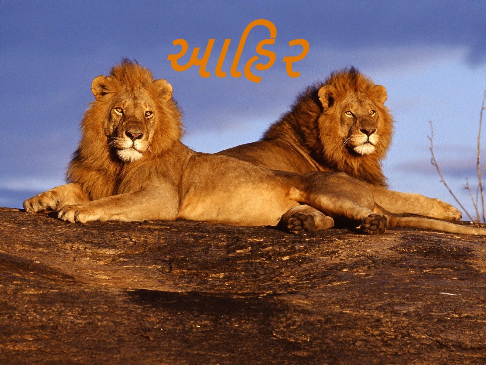 Most Inspiring Wallpaper Name Mahesh - The-best-top-desktop-lion-wallpapers-hd-lion-wallpaper-13  Perfect Image Reference_303911.jpg