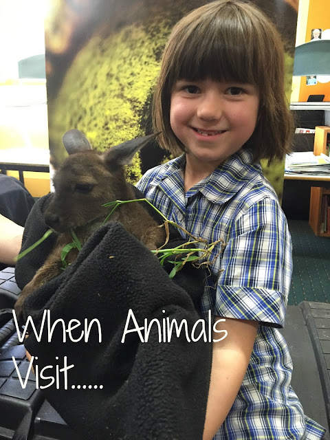 When Animals Visit
