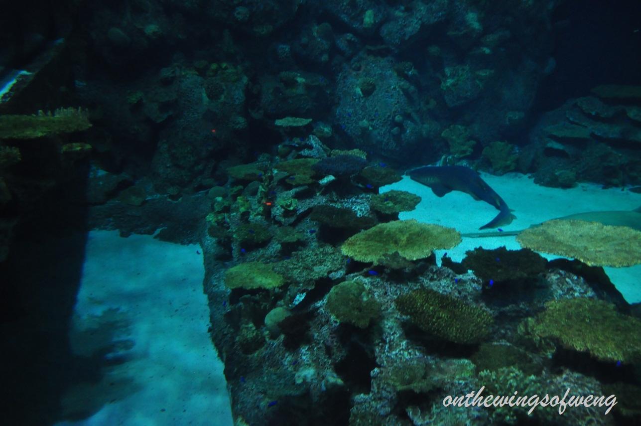 Onthewingsofweng Shark Reef Aquarium Mandalay Bay Las