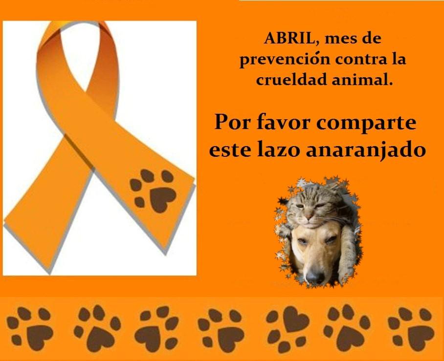 ¡¡No al maltrato ni a la crueldad de los animales!!