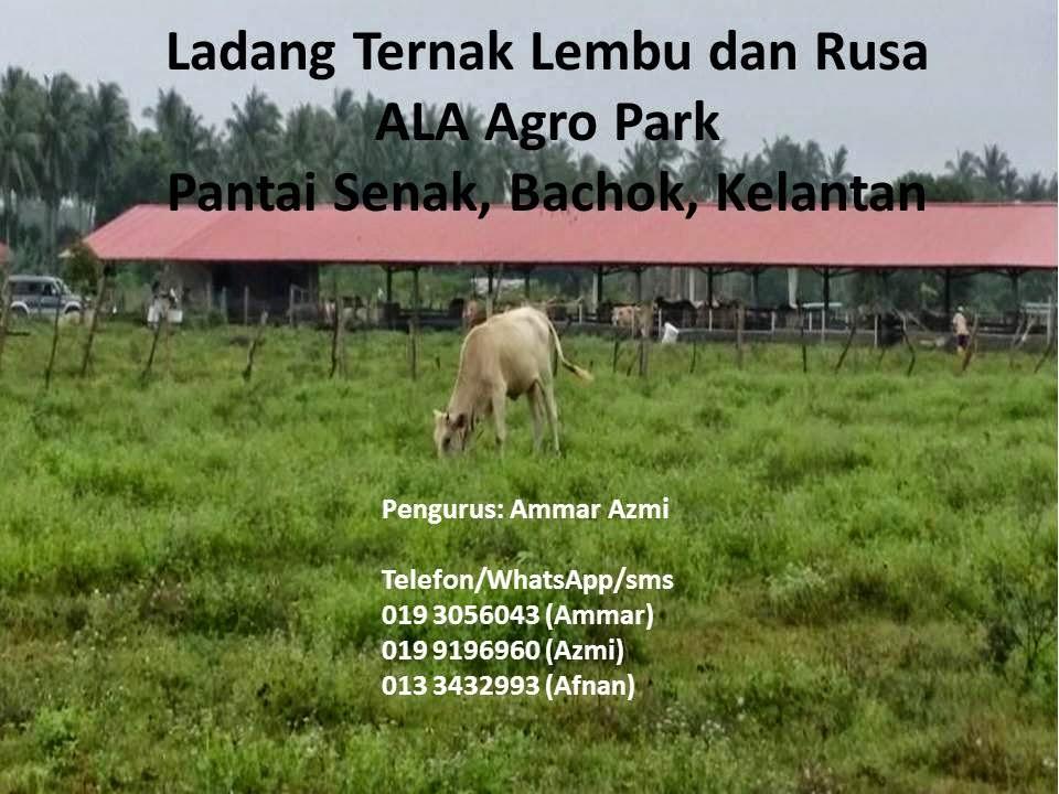 Ladang Ternak Lembu