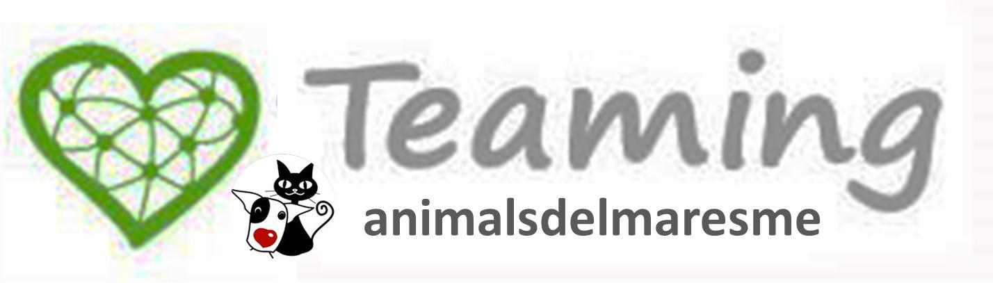 Suma't al nostre Teaming per 1€/mes