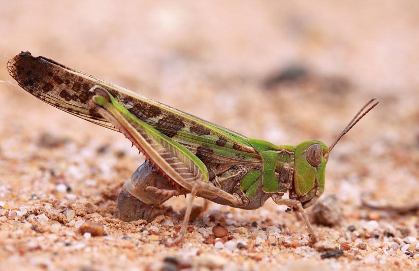 The Life of Animals Locusts Swarm Bible