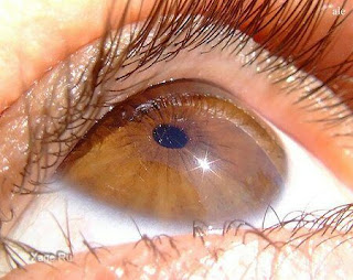 Слепоту можно лечить простой инъекцией в глаз: открытие ученых