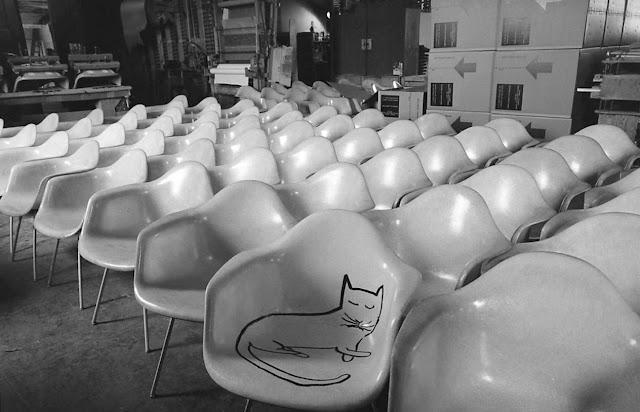 Bises au chat