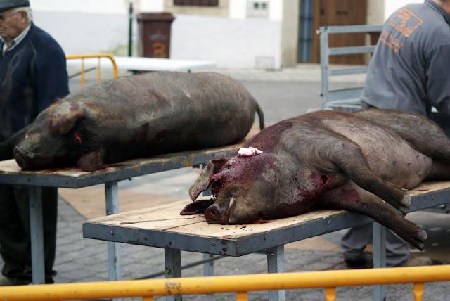 Matanza del cerdo en Parrillas (Toledo)