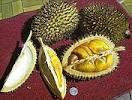 Cara Paling Aman Memakan Durian