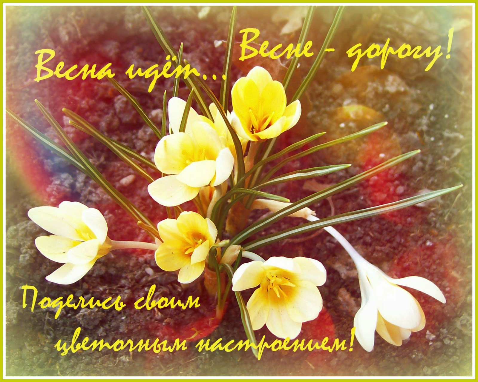 http://kaleidoskop63.blogspot.ru/2014/04/galereya-vesennego-tsveteniya.html