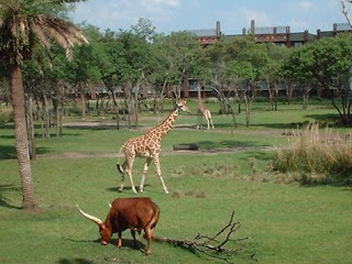 Animal Kingdom Lodge Florida Resident Discount