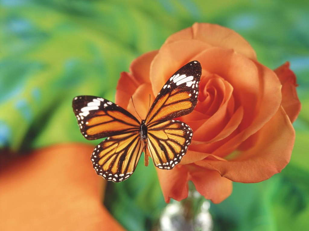 Desktop wallpapers animals wallpapers flowers wallpapers for Butterfly in a flower