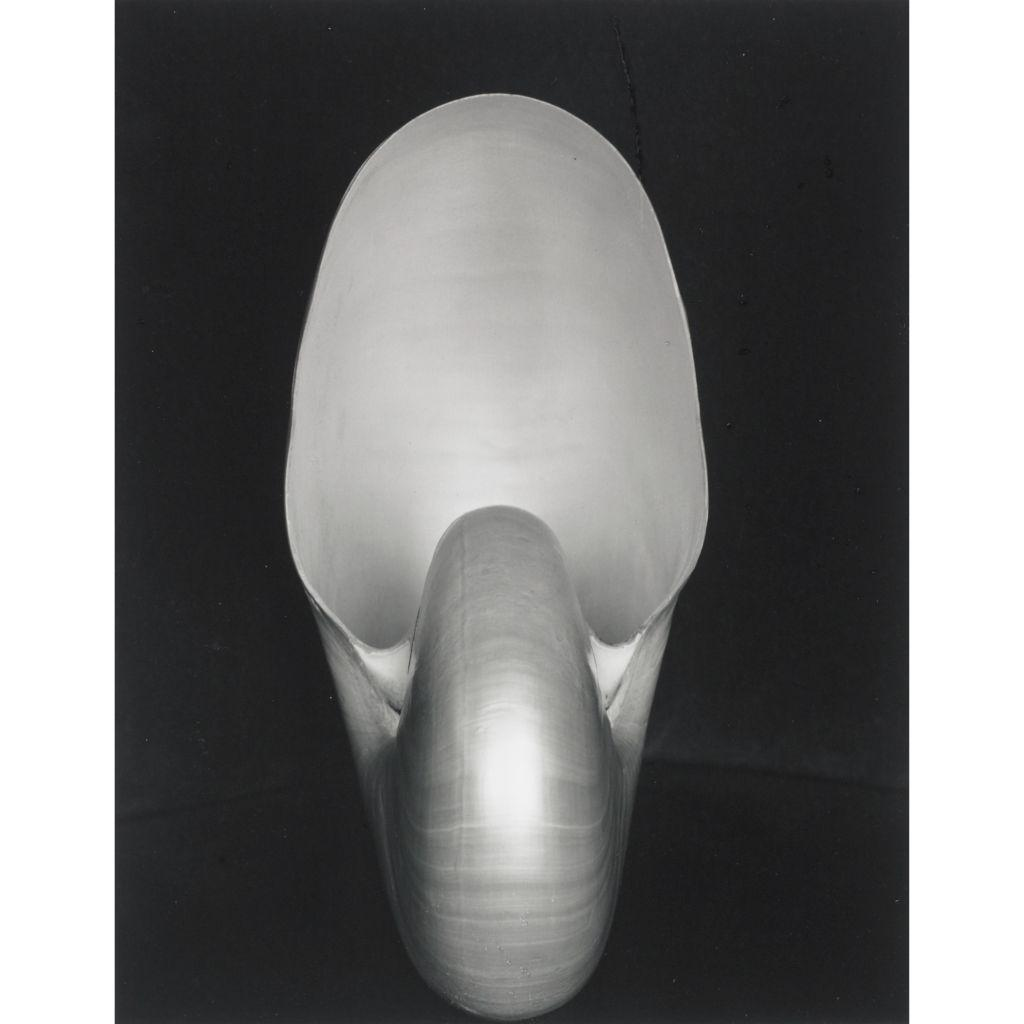 the life and influence of edward weston in the world of photography Edward weston, an american which greatly influenced the aesthetics of american photography in 1937 their influence on modern art remains inestimable.
