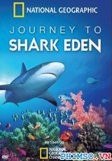 Thiên Đường Cá Mập - Shark Eden