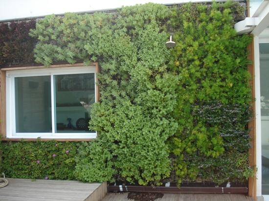 jardim vertical irrigacao automatizada:JARDIM VERTICAL