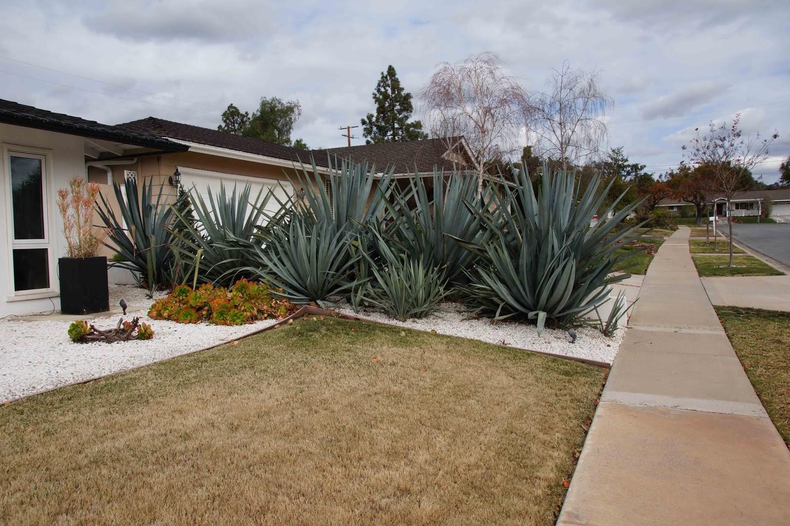 Piece Of Eden Mid Century Retro Modern Ranch House Landscape